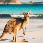 Great Adventure Tours In Australia