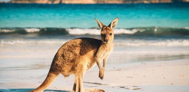 Great Adventure Tours In Australia